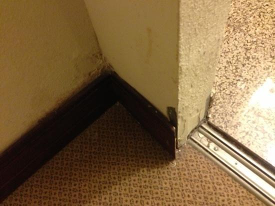 Hilton Fort Worth :                                     filth!!