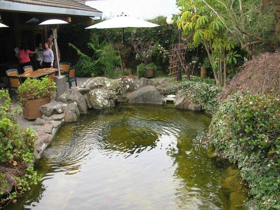 BEST WESTERN Seacliff Inn:                   Koi Pond