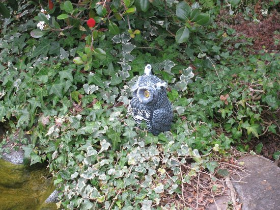Best Western Seacliff Inn:                   Owl at the Koi Pond