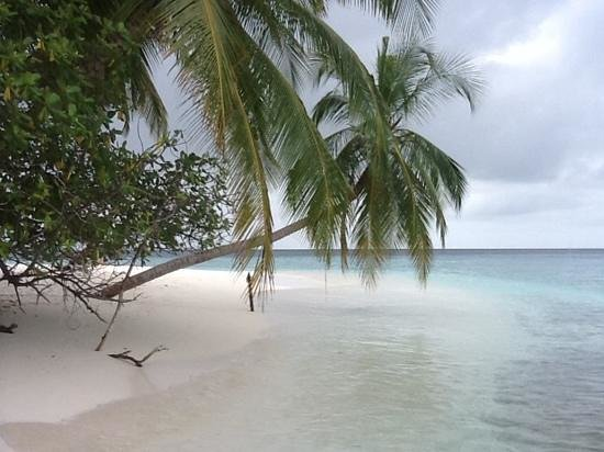 Fihalhohi Island Resort:                   stunning beach