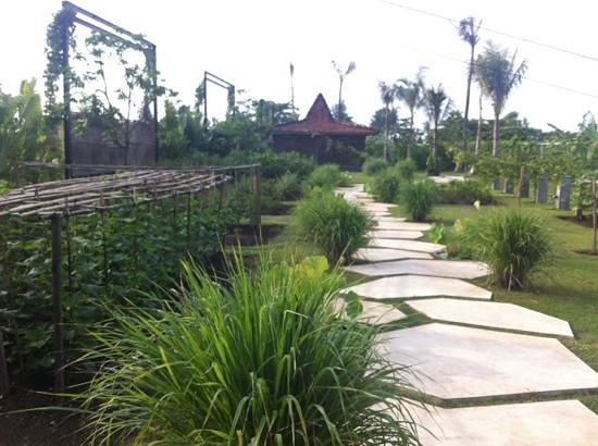 Komune Resort, Keramas Beach Bali:                   Eco garden! provides the best salads !! (organic)