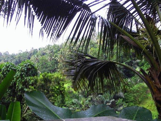 Beji Ubud Resort: View from bottom infinitiy pool