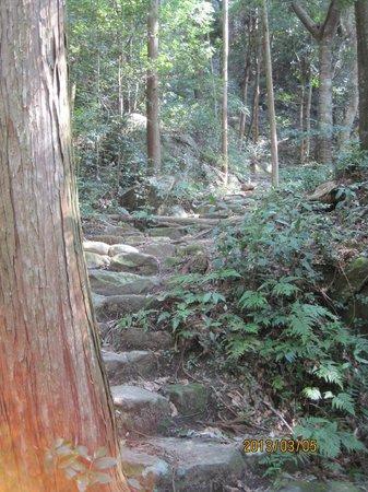 熊野古道,                   まずは急な山登りがしばらく続きます