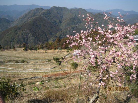 Kumano Kodo:                   バス停への道の途中での山里の風景、素敵です