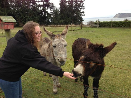 Farmhouse Bed & Breakfast:                   Sara at morning feeding of the donkeys
