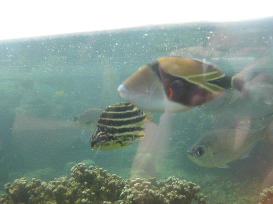 State fish - Picture of Waikiki Aquarium, Honolulu