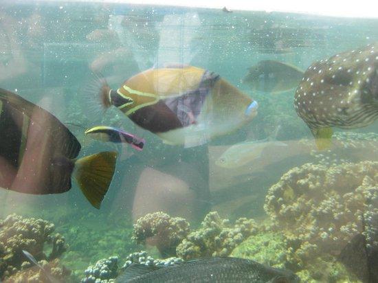 Waikiki Aquarium:                   fish