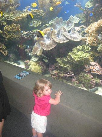Waikiki Aquarium:                   Indoor display