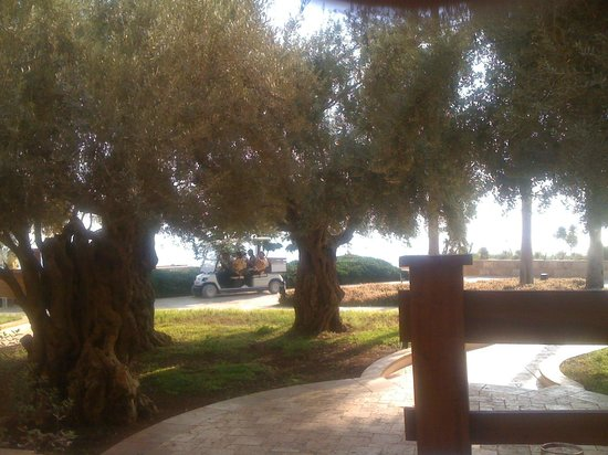 Kempinski Hotel Ishtar Dead Sea:                   Вид из номера