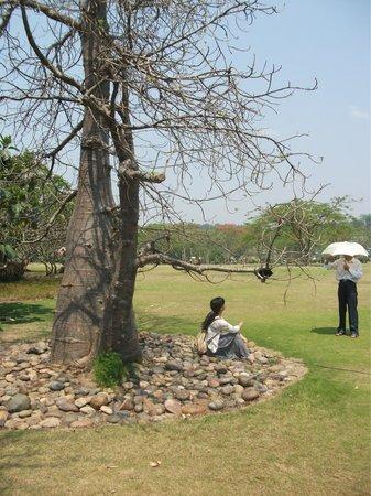 Tropical Flower Garden :                   Baobab