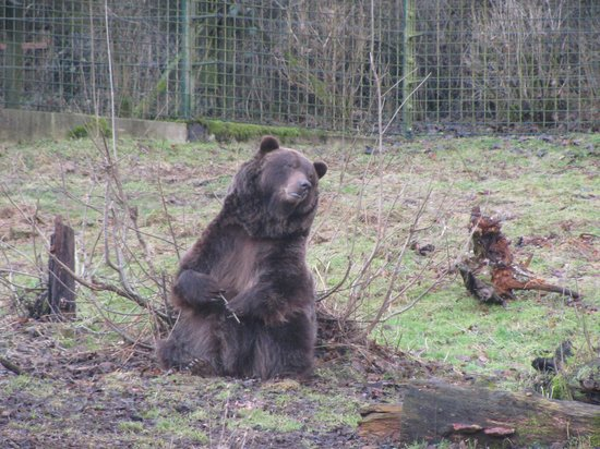 Bielefeld, Duitsland:                                     Bear Tierpark winter time