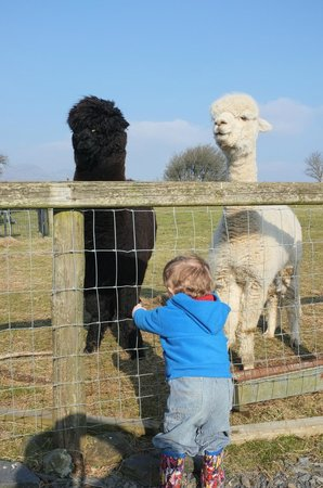 Tyddyn du Farm Luxury Suites:                   Friendly Farm Animals!