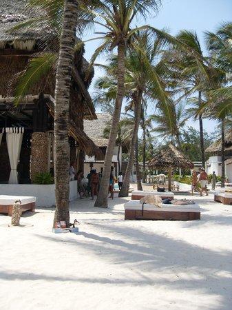 Barracuda Inn:                   la spiaggia