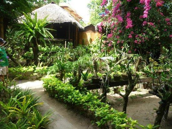 Orchids Resort:                                     le jardin