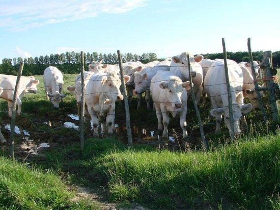 Chambres d'Hotes Les Logeries : à 250m dans le pré, quelques vaches