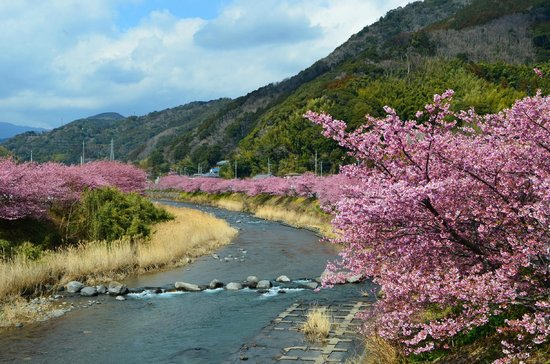 Kawazu-cho, Japan: 河津川の桜