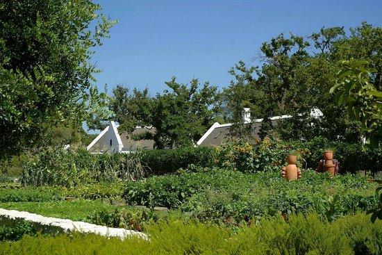 بابيلونستورن:                   the vegetable garden                 