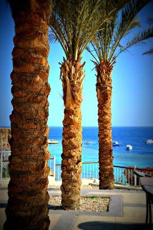 Dalla Terrazza Colombo Picture Of Reef Oasis Beach Resort