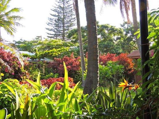 Aloha Nui:                   Hotel/Compound Front Garden