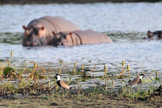 Hotel Casa Dora:                   excursão Parque de Orango- hipopotamos