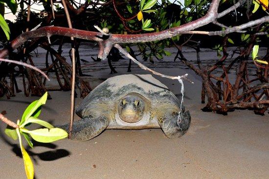 Hotel Casa Dora:                   excursão ao Poilão- Tartarugas