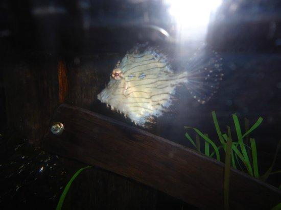 Mystic Aquarium Picture Of Mystic Aquarium Mystic