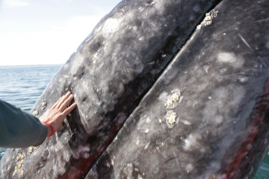 Baja Expeditions :                   touching