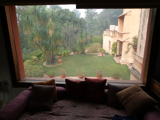 The Banyan Tree:                   view from my bed