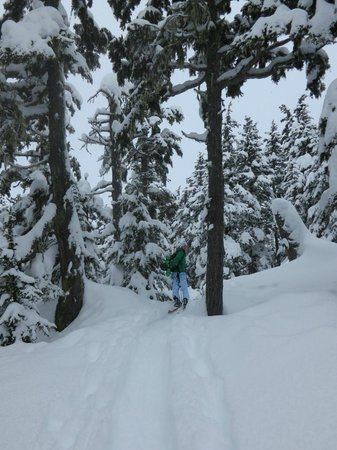 Wild Alpine - Day Tours:                   Tree skiing