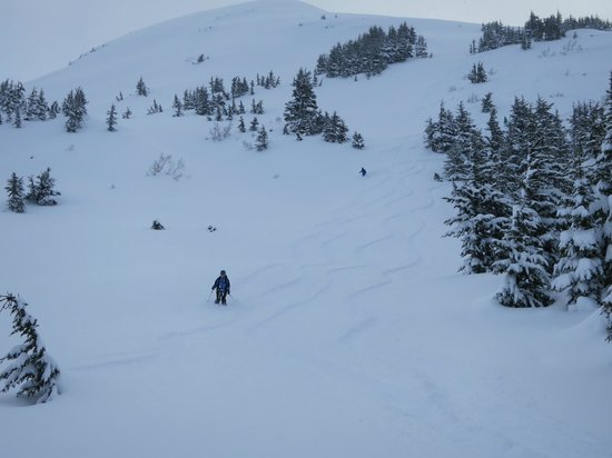 Wild Alpine - Day Tours:                   Awesome skiing!!