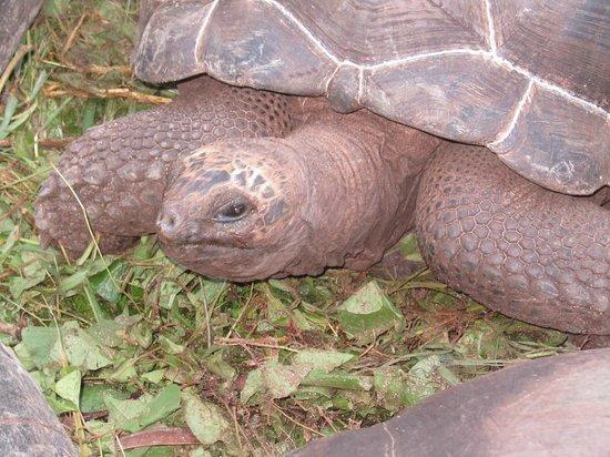 Chalets d'Anse Forbans: tartarughe in giardino