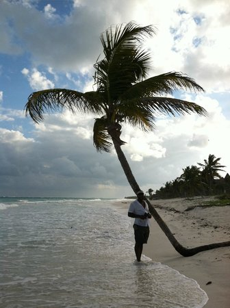 Las Palmas Maya:                   Palm Tree Lovers