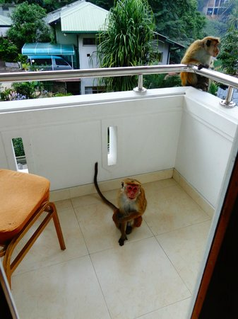 سيرين جاردن هوتل:                   Balcon de notre chambre                 