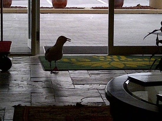 Inn at Lincoln City:                   Asking for his Breakfast.