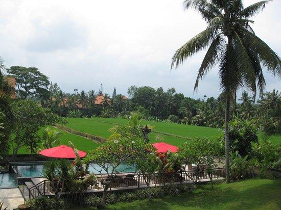 Nyoman Karsa Bungalows:                   Balcony and pool