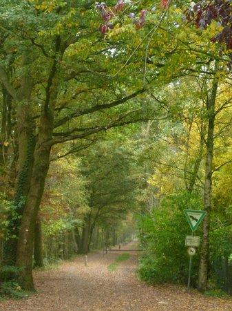 Zwillbrocker Venn:                                     Entrance to the walk around the venn