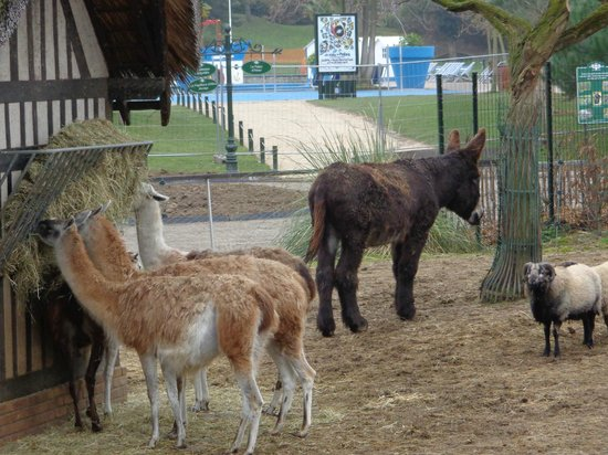 La Menagerie Photo De Jardin D Acclimatation Paris Tripadvisor