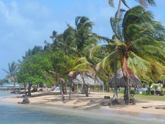 Coral Lodge:                   Playa