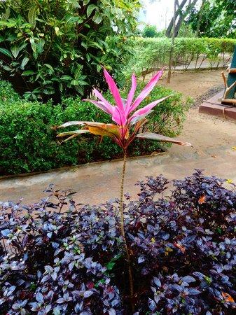 Pelwehera Village Resort:                                     Jardin luxuriant