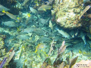 Fish at Punta Sur