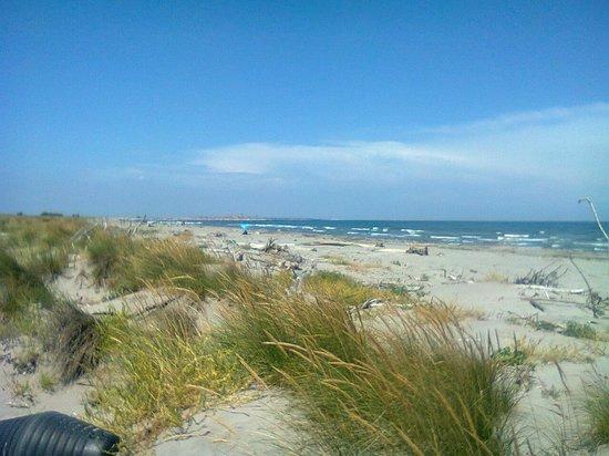 Riserva Naturale Ca' Roman:                   La spiaggia
