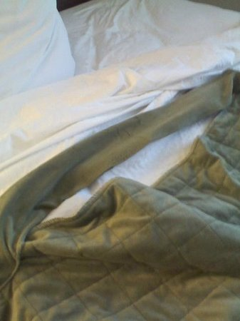 Embassy Suites by Hilton Nashville - Airport:                   Duvet cover on bedding