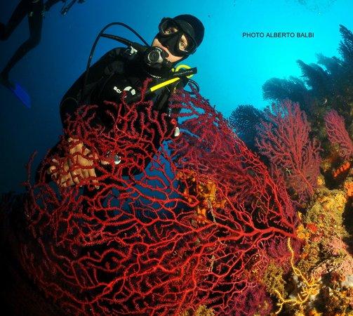 EASY DIVE Cannes: Gorgones Rouges, easy Dive