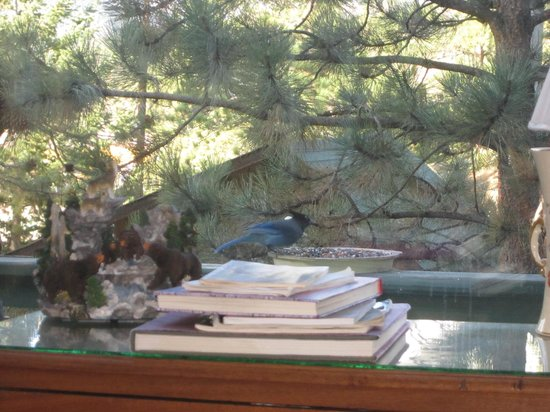 Barbara's B&B:                   Bird watch from your room (chipmunks too if you, like me think the little rode