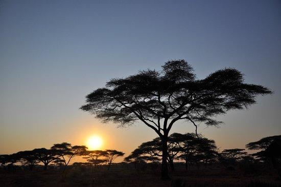 Ndutu Safari Lodge:                   tramonto
