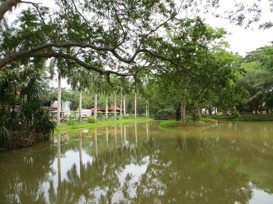 Cinnamon Lodge Habarana:                   lago