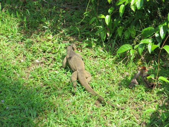 Cinnamon Lodge Habarana:                   animali in libertà 2