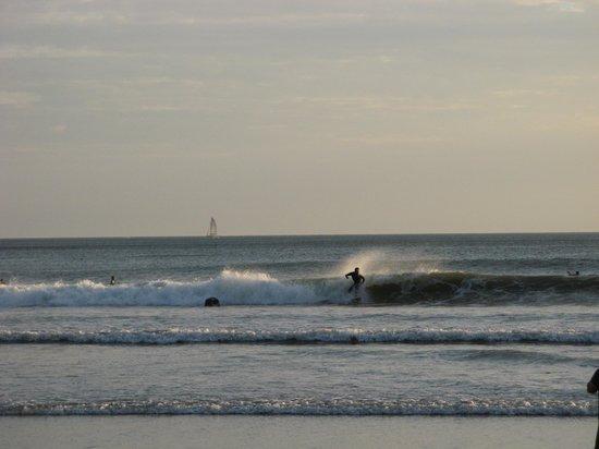 Sugar's Monkey :                   Surfers
