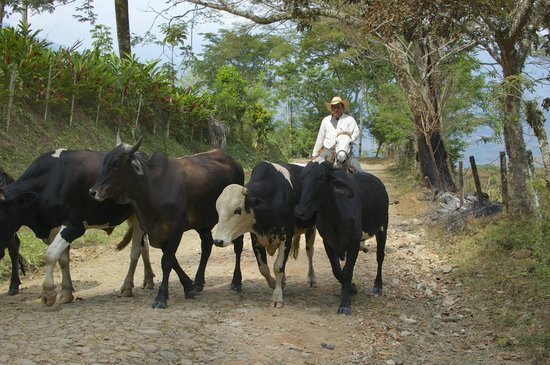 Su Casa Colombia:                                     Colombian Cowboys on the road to La Finca