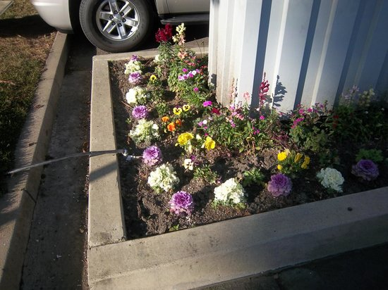 Hawthorn Suites by Wyndham Sacramento:                   flowers everywhere around the grounds -- this is the parking area